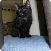 Adopt A Pet :: Emerald - Milwaukee, WI