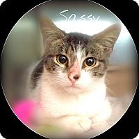 Adopt A Pet :: CURTIS - Ocala, FL