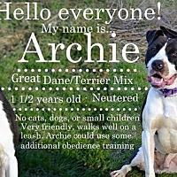 Adopt A Pet :: Archie - Saginaw, MI
