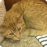 Adopt A Pet :: Jose - Medina, OH