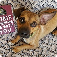 Adopt A Pet :: Sam Jackson - Yucaipa, CA