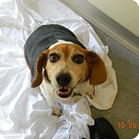 Adopt A Pet :: SUZIE - Sandusky, OH