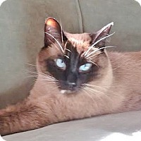 Adopt A Pet :: Sparky - Davis, CA