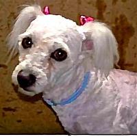 Adopt A Pet :: Beatrice - San Diego, CA