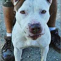 Adopt A Pet :: Macy - Norco, CA