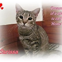 Adopt A Pet :: Carissa - Orange City, FL