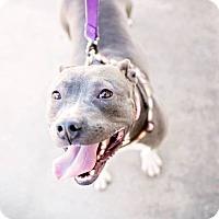 Adopt A Pet :: Gwenie - Lompoc, CA