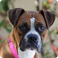Adopt A Pet :: Ursula - Alameda, CA