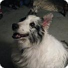 Adopt A Pet :: Christi
