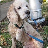 Adopt A Pet :: Oscar - Sugarland, TX