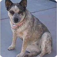 Adopt A Pet :: Beulah/Tana - Phoenix, AZ