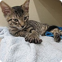 Adopt A Pet :: Blakely - Riverhead, NY