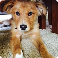 Adopt A Pet :: Brandy - Toledo, OH