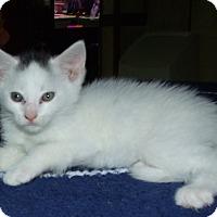 Adopt A Pet :: ZINGER - Acme, PA