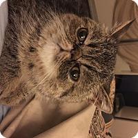 Adopt A Pet :: Lem - Beverly Hills, CA