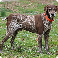 Adopt A Pet :: Ruger - Waxhaw, NC