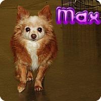 Adopt A Pet :: Max # 1022 - Nixa, MO