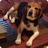 Adopt A Pet :: Courtesy: Bea - McCormick, SC
