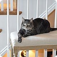 Adopt A Pet :: Sophie - Alexandria, VA