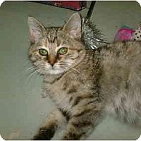 Adopt A Pet :: Abby - Warren, OH