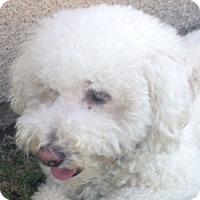 Adopt A Pet :: Dawson - La Costa, CA