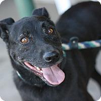 Adopt A Pet :: Phantom - Canoga Park, CA