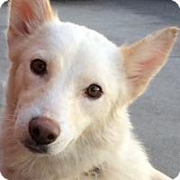 Adopt A Pet :: GLORIA (video) - Los Angeles, CA