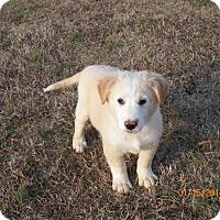 Adopt A Pet :: Tom - Boston, MA
