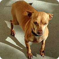 Adopt A Pet :: Cole - Las Vegas, NV