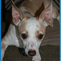 Adopt A Pet :: Dango - Buckeye, AZ