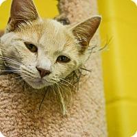 Adopt A Pet :: Yellowstone - Pittsburg, KS
