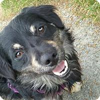 Adopt A Pet :: CHUCK - Emeryville, CA