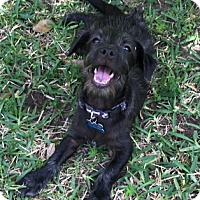 Adopt A Pet :: A - JERRY - Raleigh, NC