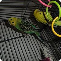 Adopt A Pet :: Neah & Jill - Neenah, WI