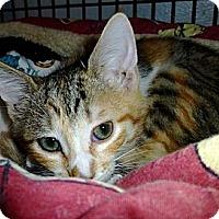 Adopt A Pet :: Natasha - Deerfield Beach, FL