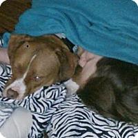 Adopt A Pet :: Nacho - Seattle, WA