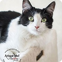 Adopt A Pet :: Vanna - Phoenix, AZ
