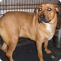 Adopt A Pet :: URGENT DIXIE - Cornwall, ON