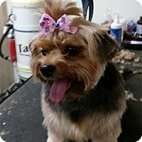 Adopt A Pet :: Carlee - Jacksonville, FL