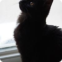 Adopt A Pet :: Kodah - St. Louis, MO