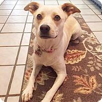Adopt A Pet :: Kate - San Antonio, TX