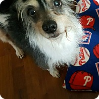Adopt A Pet :: Rocky - Blue Bell, PA