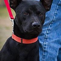 Adopt A Pet :: Chuck - Bulverde, TX