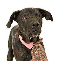 Adopt A Pet :: Bobby - St. Cloud, FL