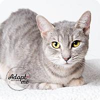 Adopt A Pet :: Harrah - Apache Junction, AZ