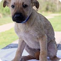 Adopt A Pet :: Logan - Waldorf, MD
