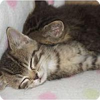 Adopt A Pet :: Peter - Xenia, OH