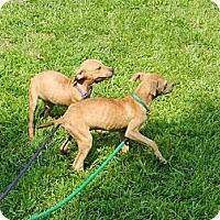 Adopt A Pet :: Sandra - South Jersey, NJ