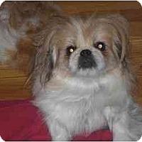Adopt A Pet :: Nina - Rigaud, QC