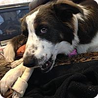 Adopt A Pet :: PRINCESS - Bryan, TX